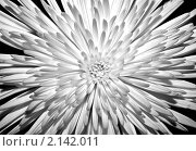 Цветок. Стоковое фото, фотограф Артем Сорокин / Фотобанк Лори
