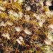 Плоды миниатюрного горного северного растения, фото № 2142115, снято 9 сентября 2010 г. (c) pzAxe / Фотобанк Лори