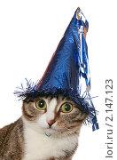 Купить «Забавная кошка в праздничном колпаке», фото № 2147123, снято 19 ноября 2010 г. (c) Круглов Олег / Фотобанк Лори
