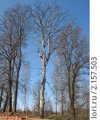 Сухие деревья. Стоковое фото, фотограф Анастасия Харитонова / Фотобанк Лори