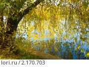 Купить «Дерево у воды осенью», фото № 2170703, снято 24 октября 2010 г. (c) ИВА Афонская / Фотобанк Лори