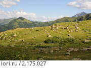 Абхазия. Горный луг. Стоковое фото, фотограф Еремин Владимир / Фотобанк Лори