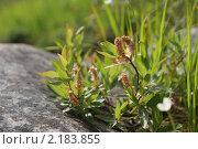 Цветы на камне. Стоковое фото, фотограф Мария Медведева / Фотобанк Лори
