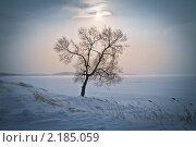 Ледяное дерево. Стоковое фото, фотограф Galina Zakovorotnaya / Фотобанк Лори