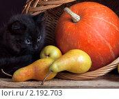 Купить «Черный котенок с тыквой и грушами», фото № 2192703, снято 3 октября 2010 г. (c) Андрей Рыбачук / Фотобанк Лори
