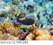 Купить «Тропические рыбки на коралловом рифе в Красном море, Египет», фото № 2194243, снято 14 января 2010 г. (c) Михаил Марковский / Фотобанк Лори