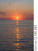 Чайка над морем на закате. Стоковое фото, фотограф Екатерина Давыдова / Фотобанк Лори