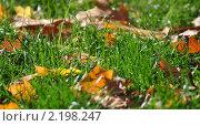 Лучи солнца на осенних листьях. Стоковое фото, фотограф Решетило Александр / Фотобанк Лори