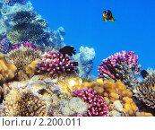 Купить «Тропические рыбки на коралловом рифе в Красном море, Египет», фото № 2200011, снято 14 января 2010 г. (c) Михаил Марковский / Фотобанк Лори