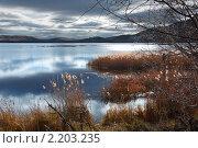 Осенний пейзаж. Тростник на берегу озера. Стоковое фото, фотограф Ольга Гаврилова / Фотобанк Лори