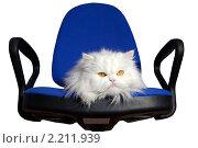 Купить «Белый кот в кресле», фото № 2211939, снято 19 октября 2008 г. (c) Георгий Shpade / Фотобанк Лори