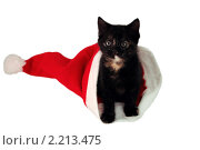 Котенок в шапке Деда Мороза. Стоковое фото, фотограф Сергей Слабенко / Фотобанк Лори