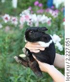 Кролик в руках. Стоковое фото, фотограф Елена Мумрина / Фотобанк Лори