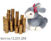 Купить «Кролик и монеты», эксклюзивное фото № 2231255, снято 19 декабря 2010 г. (c) Юрий Морозов / Фотобанк Лори