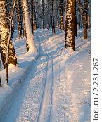 Лыжня в зимнем лесу. Стоковое фото, фотограф Alexander Zholobov / Фотобанк Лори