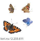 Коллаж из  бабочек. Стоковое фото, фотограф Макарова Елена / Фотобанк Лори