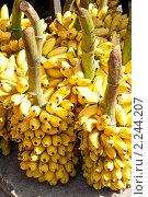 Купить «Грозди желтых бананов. Шри-Ланка», фото № 2244207, снято 13 декабря 2010 г. (c) Екатерина Овсянникова / Фотобанк Лори