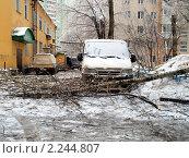 Купить «Обледеневшее дерево упало на машину», фото № 2244807, снято 26 декабря 2010 г. (c) SevenOne / Фотобанк Лори