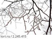 Купить «Лед на ветках деревьев», фото № 2245415, снято 26 декабря 2010 г. (c) Екатерина Овсянникова / Фотобанк Лори