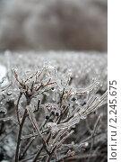 Зима (2010 год). Стоковое фото, фотограф Лена Лазарева / Фотобанк Лори
