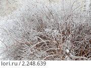 Купить «После ледяного дождя», фото № 2248639, снято 26 декабря 2010 г. (c) Parmenov Pavel / Фотобанк Лори
