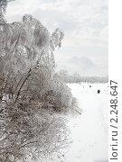 Купить «Обледеневшие деревья на берегу замерзшего озера», фото № 2248647, снято 26 декабря 2010 г. (c) Parmenov Pavel / Фотобанк Лори