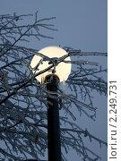 Купить «После ледяного дождя. Ночь, улица, фонарь...», фото № 2249731, снято 28 декабря 2010 г. (c) Валерия Попова / Фотобанк Лори