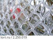 Купить «После ледяного шторма», фото № 2250019, снято 27 декабря 2010 г. (c) Сергей Лаврентьев / Фотобанк Лори