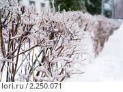 Купить «После ледяного шторма», фото № 2250071, снято 27 декабря 2010 г. (c) Сергей Лаврентьев / Фотобанк Лори