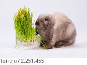 Купить «Кролик и куст», фото № 2251455, снято 21 ноября 2018 г. (c) Илья Малышев / Фотобанк Лори