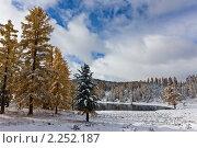 Зимний пейзаж. Стоковое фото, фотограф Argument / Фотобанк Лори