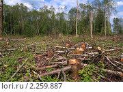 Купить «Вырубленный лес», фото № 2259887, снято 13 мая 2010 г. (c) Сергей Яковлев / Фотобанк Лори