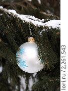 Серебряный шар на заснеженной ёлке в лесу. Стоковое фото, фотограф Татьяна Емшанова / Фотобанк Лори