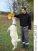 Купить «Молодой человек кормит листьями клена белого козленка», фото № 2267123, снято 2 октября 2010 г. (c) Василий Вишневский / Фотобанк Лори