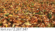 Купить «Опавшие листья», фото № 2267347, снято 9 октября 2010 г. (c) АЛЕКСАНДР МИХЕИЧЕВ / Фотобанк Лори