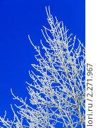 Купить «Зимний пейзаж», фото № 2271967, снято 7 января 2011 г. (c) Василий Вишневский / Фотобанк Лори