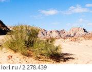 Купить «Растения пустыни. Цветной каньон. Синай. Египет», фото № 2278439, снято 8 января 2011 г. (c) Екатерина Овсянникова / Фотобанк Лори
