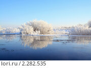 Купить «Кусты на берегу реки», фото № 2282535, снято 30 ноября 2010 г. (c) Сергей Яковлев / Фотобанк Лори