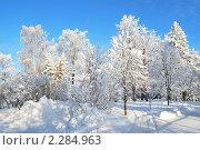 Купить «Парк Круунунпуисто. Иматра, Финляндия», фото № 2284963, снято 24 января 2010 г. (c) Татьяна Савватеева / Фотобанк Лори