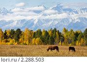 Лошадки пасутся у гор. Стоковое фото, фотограф Виктория Катьянова / Фотобанк Лори