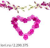 Купить «Цветочная рамка в виде сердца и орхидеи», фото № 2290375, снято 12 марта 2009 г. (c) Литова Наталья / Фотобанк Лори