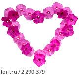 Купить «Цветочная рамка в виде сердца», фото № 2290379, снято 27 августа 2010 г. (c) Литова Наталья / Фотобанк Лори
