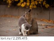 Кот и кошка на улице. Стоковое фото, фотограф Юлия Колтырина / Фотобанк Лори