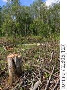 Купить «Вырубленный лес», фото № 2305127, снято 13 мая 2010 г. (c) Сергей Яковлев / Фотобанк Лори