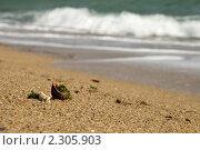 Солнечный берег. Стоковое фото, фотограф Артем Коржуков / Фотобанк Лори