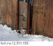 """Маленькая собака у ворот с надписью """"Осторожно, собака"""" Стоковое фото, фотограф Антон Алябьев / Фотобанк Лори"""
