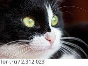 Купить «Кот», фото № 2312023, снято 16 января 2011 г. (c) Швайгерт Екатерина / Фотобанк Лори