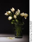 Купить «Букет белых роз», фото № 2313507, снято 28 января 2011 г. (c) Литова Наталья / Фотобанк Лори