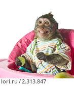 Купить «Обезьяна с виноградиной в руке в розовом детском кресле. Виноград не отдам!», фото № 2313847, снято 4 июля 2010 г. (c) Ирина Кожемякина / Фотобанк Лори