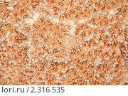 Купить «Текстура коралла крупным планом», фото № 2316535, снято 9 декабря 2009 г. (c) Losevsky Pavel / Фотобанк Лори